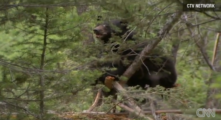 Bear Eats Convicted Murderer, Later Euthanized