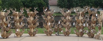 It appears two brothers who ran the largest U.S. deer poaching operation in history won't be