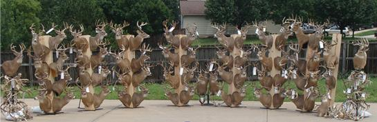 Court Erases Prison Time for Largest Deer Poaching Case in U.S. History