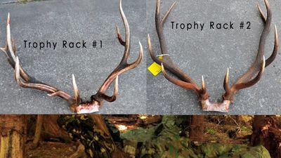 dumb_poachers