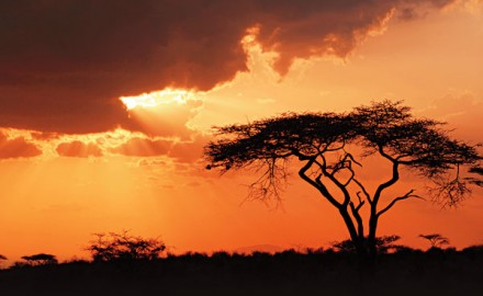 For most of us, Africa is about the hunting, but it is a shame to travel all the way around the
