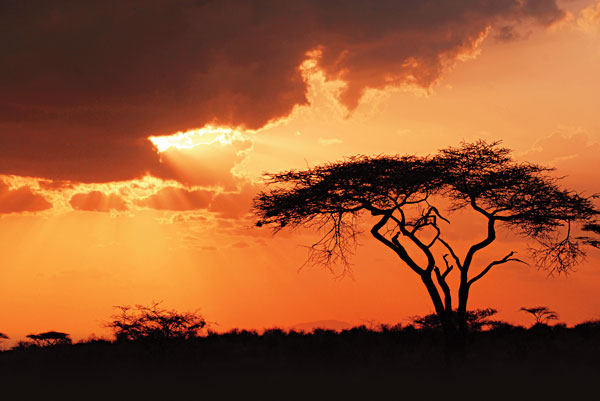 5 Great Options for Travel in Africa