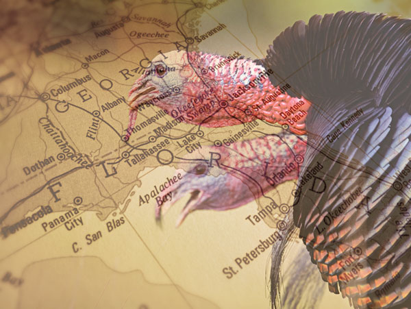 Michael Waddell's Ultimate Southern Turkey Hunting Road Trips
