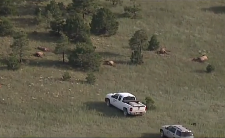 New Mexico wildlife officials are left scratching their heads after a herd of elk was found dead