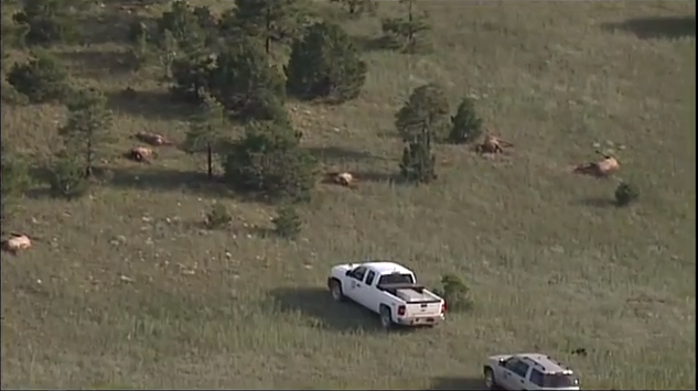 Over 100 New Mexico Elk Found Dead on Ranch