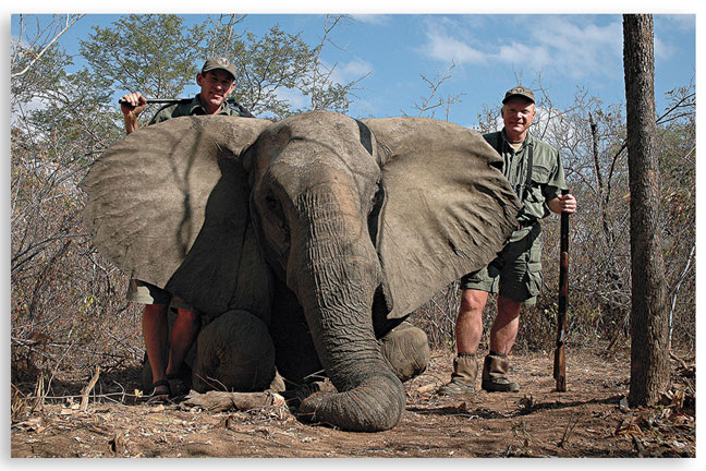 africas_dangerous_game_elephant