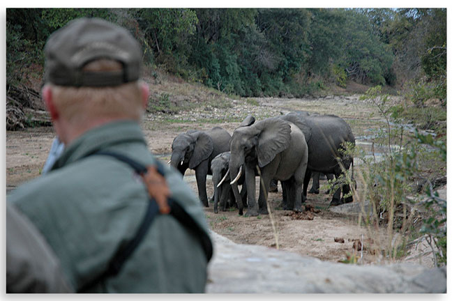 africas_dangerous_game_elephants