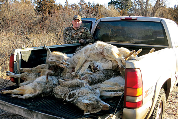 Why Coyote Contests Are Good for Hunting