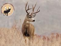 mule_deer_drought_f
