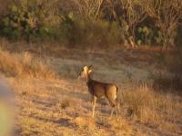 Good Times at Deer Camp