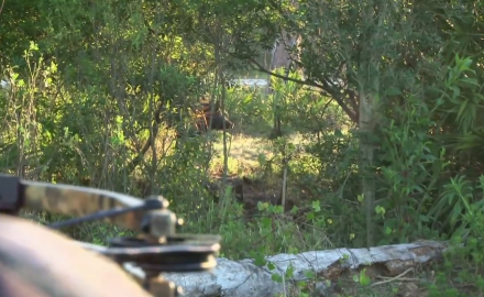 Craig Boddington is armed with his crossbow and puts the stalk on a wild boar.