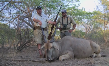 Mike Schoby sets out in Africa looking for cape buffalo, but stumbles across a herd of eland.