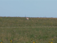 Windy Antelope Hunt