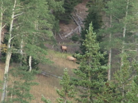 High Country Elk Hunt