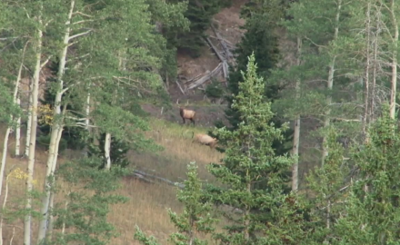 Kevin Steele is in the high country of Colorado on the hunt for bull elk.