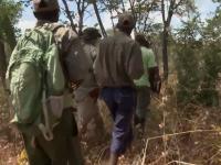 Tracking an Elephant through Zimbabwe