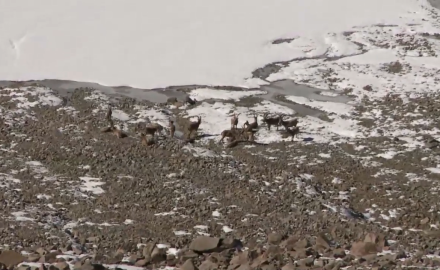 Craig Boddington, high-country hunter extraordinaire pursues one of the last species of wild goat