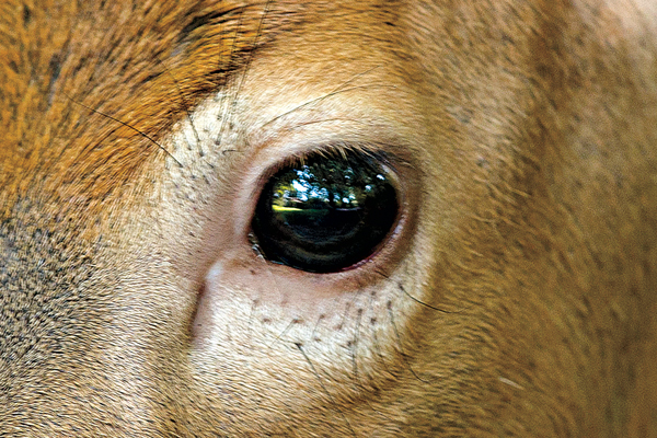 The Science of Sight: What Whitetails Can Really See