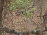 Buffalo Hunting Hot Spot