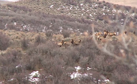 Come along with Mike Schoby as he pursues a bull elk in northeastern Colorado's oak scrub country.