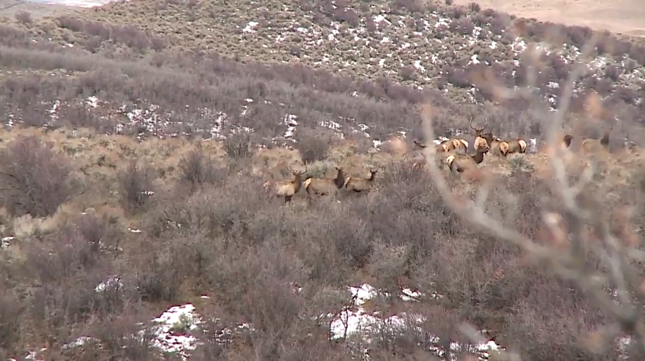 Elk Hunt in Colorado