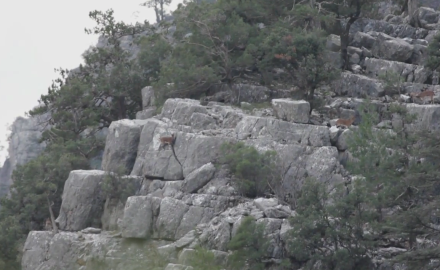 Mike Schoby ventures to Turkey to hunt the legendary Anatolian mountain goat.