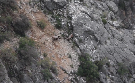Mike Schoby and Alice Poluchova trek to Turkey to hunt the legendary Anatolian mountain goat.
