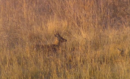 Craig Boddington and family head to South Africa's Eastern Cape in search of a nice reedbuck.