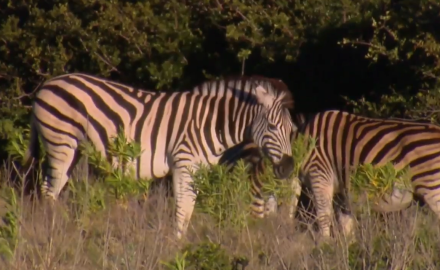 Craig Boddington and family head to South Africa's Eastern Cape on a zebra hunt.