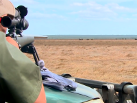 Hunting Buffalo Bulls Down-Under