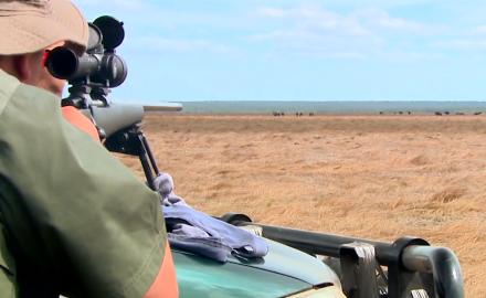 Hunting Buffalo Bulls Down-Under