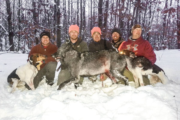 hounds_wolves_2