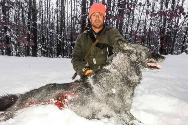 hounds_wolves_3