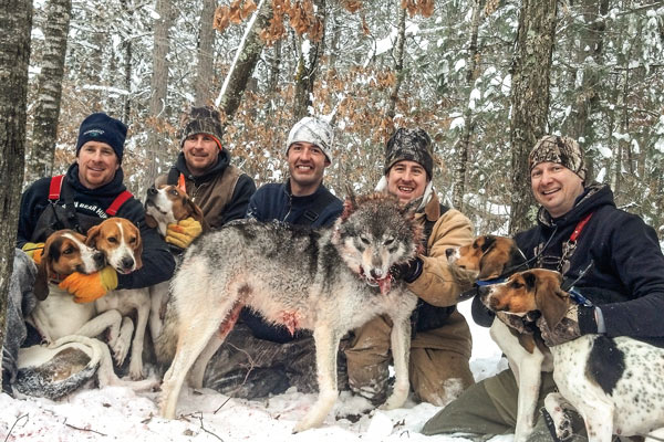 hounds_wolves_4