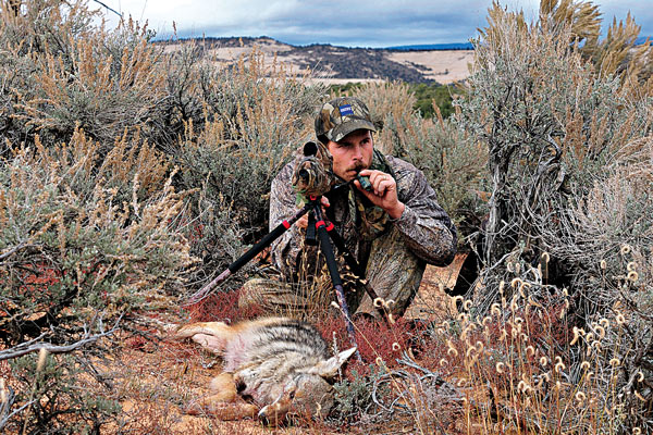 Keep it Simple: Tips for Calling Coyotes More Effectively