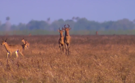 Brittany Boddington capitalizes on her chance to take a hartebeest in Mozambique.