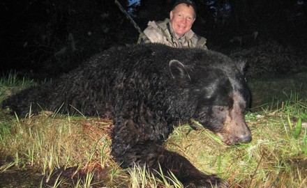 The American black bear, Ursus americanus, is by far the most widespread bear in the Western
