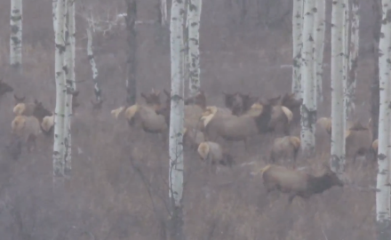Kevin Steele and Jason Morton attempt to get on a big bull elk as they battle the elements in