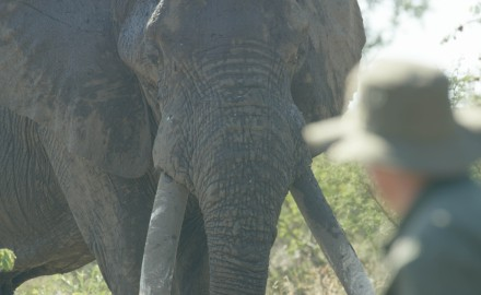 Elephants are one of the mostly widely persecuted animals on earth. And while poaching across the