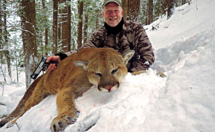 Mountain lion hunting is challenging, but opportunities are more available than you'd