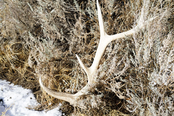 elk-shed-hunting-secrets