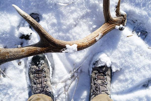 elk-shed-hunting-tips