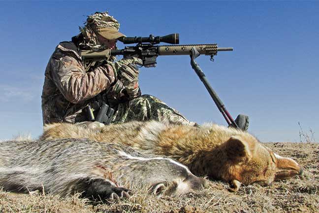 Proven Tactics to Kill More Coyotes
