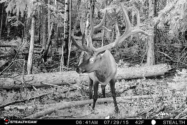 Public-Land-Elk-Trail-Camera