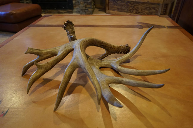 5 Unique Uses for Shed Antlers