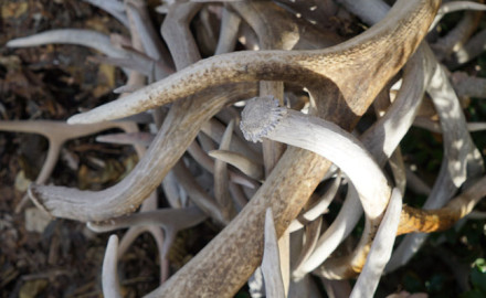 There's no doubt finding sheds can be exciting, but once you've found them, what can you do with