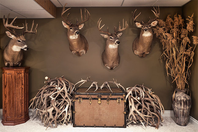 Outfitting Your Trophy Room Ideas
