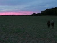 stalking fallow deer