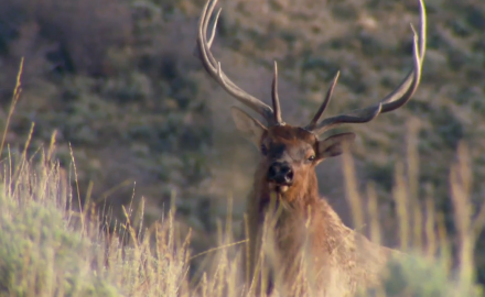 Petersens Hunting's Mike Schoby is after bugling elk in Utah.  In this video, Schoby is hunting the