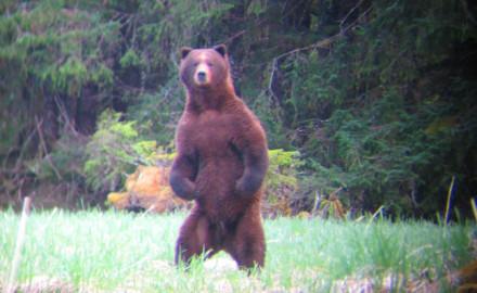 hunting-bears